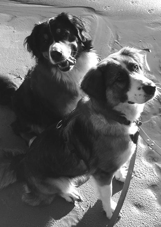 Hunde Mitarbeiterfoto